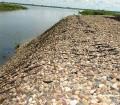 Укрепление берегов водоемов с помощью георешетки